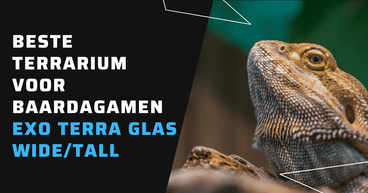 Beste terrarium voor baardagamen Exo Terra Glas Wide Tall baaragaam terrarium inrichting