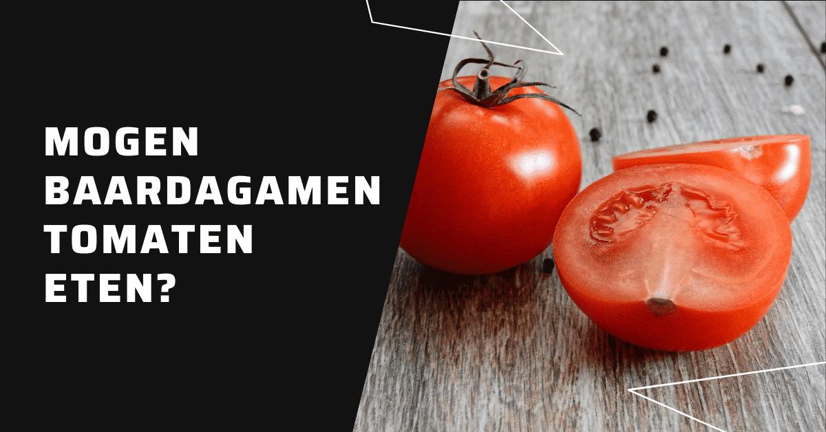 Mogen baardagamen tomaten eten