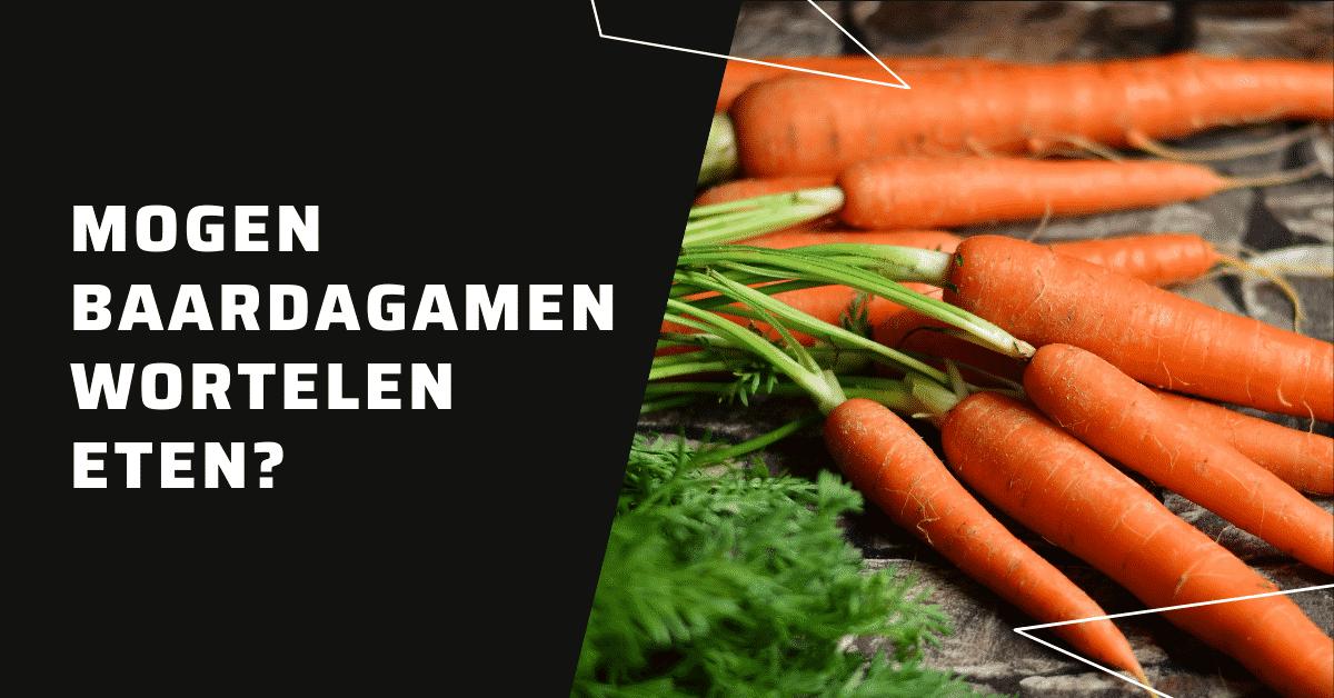 Mogen baardagamen wortelen eten